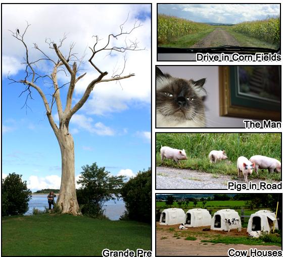 Grande Pre Nova Scotia, Cow Houses