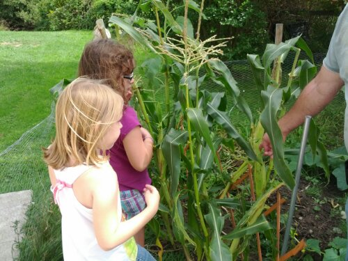 Corn Education in Garden